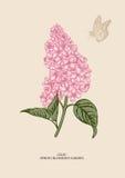 Ιώδης κλάδος λεπτομερές ανασκόπηση floral διάνυσμα σχεδίων Στοκ Εικόνες