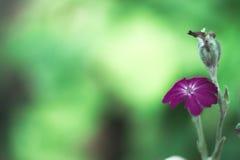 Ιώδης μακροεντολή λουλουδιών με το θολωμένο υπόβαθρο μια ηλιόλουστη ημέρα Στοκ Εικόνες