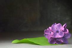 Ιώδης μακρο σύνθεση λουλουδιών Στοκ φωτογραφίες με δικαίωμα ελεύθερης χρήσης