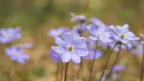 Ιώδη λουλούδια στο δάσος φιλμ μικρού μήκους