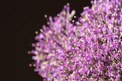 Ιώδη λουλούδια στο θολωμένο υπόβαθρο με το boke Στοκ Φωτογραφία
