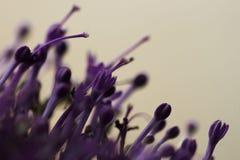 Ιώδη λουλούδια στο θολωμένο υπόβαθρο με το boke Στοκ Εικόνα