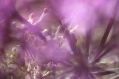 Ιώδη λουλούδια στο θολωμένο υπόβαθρο με το boke Στοκ Εικόνες