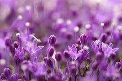 Ιώδη λουλούδια στο θολωμένο υπόβαθρο με το boke Στοκ Φωτογραφίες