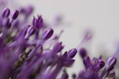 Ιώδη λουλούδια στο θολωμένο υπόβαθρο με το boke Στοκ εικόνες με δικαίωμα ελεύθερης χρήσης