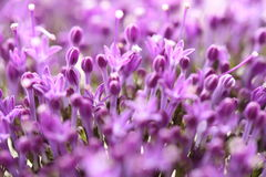 Ιώδη λουλούδια στο θολωμένο υπόβαθρο με το boke Στοκ φωτογραφία με δικαίωμα ελεύθερης χρήσης