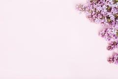 Ιώδη λουλούδια στο ρόδινο υπόβαθρο στη δεξιά πλευρά του ρόδινου backgroun στοκ εικόνα