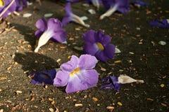 Ιώδη λουλούδια στο συγκεκριμένο υπόβαθρο Στοκ φωτογραφία με δικαίωμα ελεύθερης χρήσης