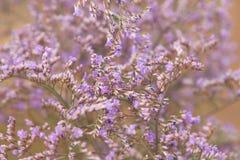 Ιώδη λουλούδια τομέων χλόης Tumbleweed Στοκ Εικόνα