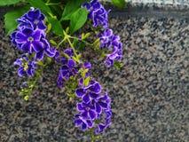 ιώδη σπάνια άγρια λουλούδια Στοκ Εικόνες