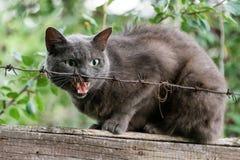 Ι βρυχηθμοί γατών που κάθονται στο φράκτη πίσω από οδοντωτό - καλώδιο Επιθετική γκρίζα γάτα που υπερασπίζει το έδαφός του στοκ φωτογραφία με δικαίωμα ελεύθερης χρήσης