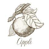 Ιδιαίτερα λεπτομερές συρμένο χέρι μήλο Στοκ φωτογραφία με δικαίωμα ελεύθερης χρήσης