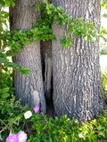 ιδιαίτερο δέντρο Στοκ Εικόνες
