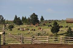 ιδιωτικότητα λιβαδιού αλόγων αγροτών διασταύρωσης Στοκ εικόνα με δικαίωμα ελεύθερης χρήσης