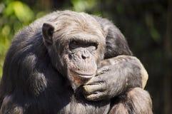ι ο πίθηκος σας σκέφτετα&i Στοκ φωτογραφία με δικαίωμα ελεύθερης χρήσης