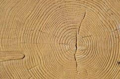 Ι περιορίζει ένα δέντρο Στοκ εικόνα με δικαίωμα ελεύθερης χρήσης