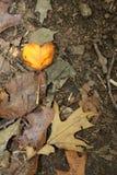 Ι φύλλο πτώσης καρδιών στοκ φωτογραφία
