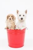 Κάδος και σκυλιά Στοκ φωτογραφία με δικαίωμα ελεύθερης χρήσης