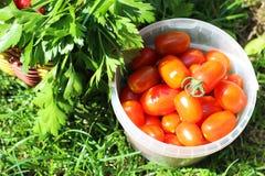 Κάδος με τα λαχανικά στη χλόη Στοκ εικόνα με δικαίωμα ελεύθερης χρήσης