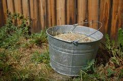 Κάδος που γεμίζουν αγροτικός με το σιτάρι Στοκ εικόνες με δικαίωμα ελεύθερης χρήσης