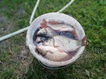 Κάδος ψαριών Στοκ φωτογραφία με δικαίωμα ελεύθερης χρήσης