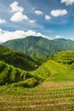 Κάθετη φωτογραφία τοπίων των πεζουλιών ρυζιού στην Κίνα Στοκ Εικόνες