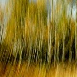 Κάθετοι κίτρινος και ο ουρακοτάγκος blurr από τα δέντρα το φθινόπωρο στοκ εικόνα με δικαίωμα ελεύθερης χρήσης