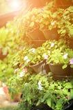 Κάθετος κήπος με το θερμό φως του ήλιου πρωινού Στοκ Εικόνα