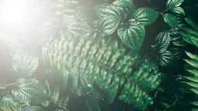 Κάθετος κήπος με το τροπικό πράσινο φύλλο, σκοτεινός τόνος με τον ήλιο lig στοκ εικόνα με δικαίωμα ελεύθερης χρήσης