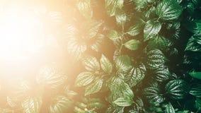 Κάθετος κήπος με το τροπικό πράσινο φύλλο, σκοτεινός τόνος με τον ήλιο ris στοκ φωτογραφία με δικαίωμα ελεύθερης χρήσης