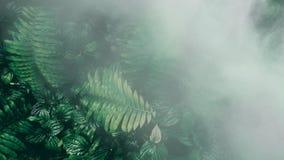 Κάθετος κήπος με το τροπικό πράσινο φύλλο με την ομίχλη και τη βροχή, σκοτεινές στοκ εικόνες με δικαίωμα ελεύθερης χρήσης