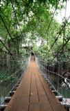 Κάθετος ξύλινος διαγώνιος ποταμός γεφυρών αναστολής Στοκ Εικόνα