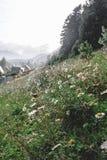 Κάθετος πυροβολισμός των λουλουδιών άνοιξη στα βουνά Στοκ Εικόνα
