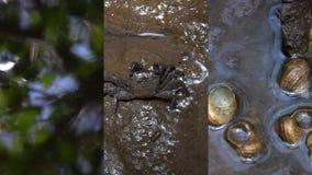 Κάθετο βίντεο για τις κοινωνικές εφαρμογές μέσων στις κινητές συσκευές Ζώα στους υγρότοπους του δάσους μαγγροβίων απόθεμα βίντεο