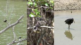 Κάθετο βίντεο για τις κοινωνικές εφαρμογές μέσων στις κινητές συσκευές Πουλιά υδρόβιων πουλιών απόθεμα βίντεο