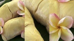 Κάθετο βίντεο για τις κοινωνικές εφαρμογές μέσων στις κινητές συσκευές Φρέσκα ακατέργαστα εξωτικά τροπικά ταϊλανδικά φρούτα Duria φιλμ μικρού μήκους