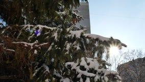Κάθετο πανόραμα του κομψού δέντρου με το χιόνι φιλμ μικρού μήκους