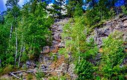 Κάθετο πρόσωπο βράχου στο δάσος αγριοτήτων Στοκ Εικόνες