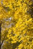Κάθετο υπόβαθρο με το φύλλωμα φθινοπώρου Στοκ Εικόνες