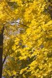 Κάθετο υπόβαθρο με το φύλλωμα φθινοπώρου Στοκ εικόνα με δικαίωμα ελεύθερης χρήσης