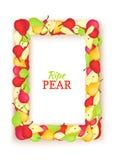 Κάθετο χρωματισμένο ορθογώνιο πλαίσιο που αποτελείται από τα εύγευστα φρούτα αχλαδιών Διανυσματική απεικόνιση καρτών Πλαίσιο αχλα Στοκ Φωτογραφία