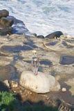 κάθισμα βράχων SAN πελεκάνων Καλιφόρνιας Diego Στοκ φωτογραφίες με δικαίωμα ελεύθερης χρήσης