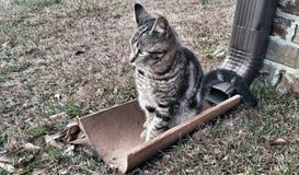 Κάθισμα γατακιών Στοκ Φωτογραφίες