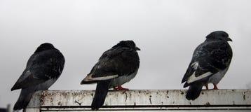 κάθισμα 2 πουλιών Στοκ Εικόνα