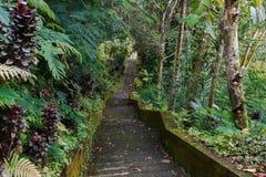 Κάθοδος στη ζούγκλα στοκ εικόνες