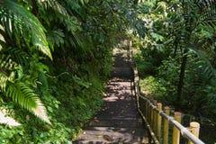 Κάθοδος στη ζούγκλα στοκ εικόνα με δικαίωμα ελεύθερης χρήσης