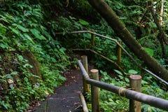 Κάθοδος στη ζούγκλα στοκ φωτογραφίες
