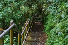 Κάθοδος στη ζούγκλα στοκ φωτογραφία με δικαίωμα ελεύθερης χρήσης