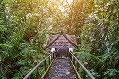 Κάθοδος στον άξονα στη ζούγκλα στοκ φωτογραφία με δικαίωμα ελεύθερης χρήσης