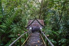 Κάθοδος στον άξονα στη ζούγκλα στοκ φωτογραφίες με δικαίωμα ελεύθερης χρήσης